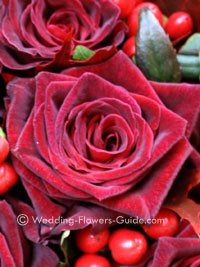 close up photo of the black baccara rose in a bridal bouquet
